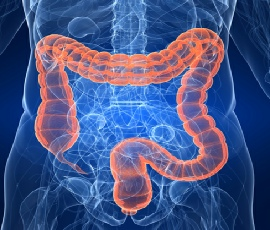 Abdomen and Bowel